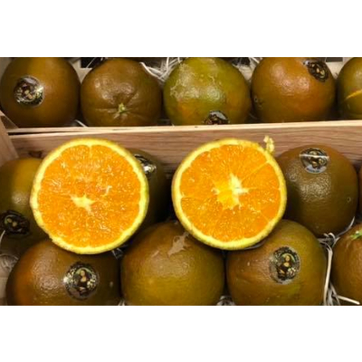 Orange Navel Chocolat (500g)
